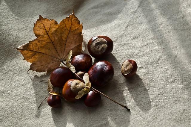 autumn-72195_1280